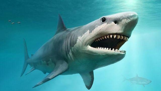 1001 thắc mắc: Vì sao cá mập không có xương?