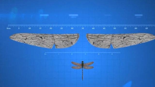 Tại sao côn trùng lại có kích thước nhỏ bé như vậy? Vì sao con gián mất đầu mà vẫn có thể sống và hô hấp bình thường?
