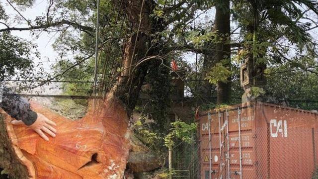 """Hạ giá hơn chục tỷ, lô gỗ sưa trăm tỷ ở Hà Nội vẫn """"ế khách"""""""