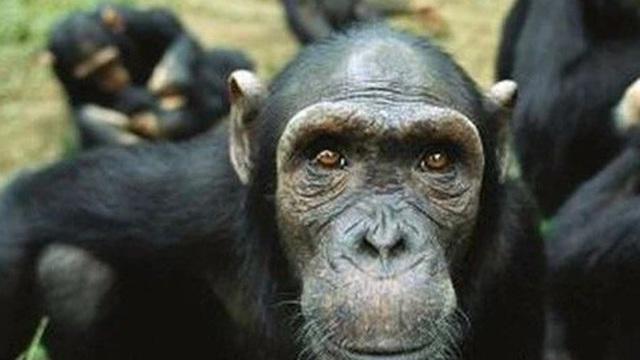 Tại sao con người phải cắt tóc còn các loài động vật khác thì không cần?