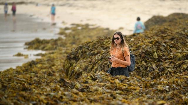 24h qua ảnh: Rong biển phủ kín bãi biển Australia