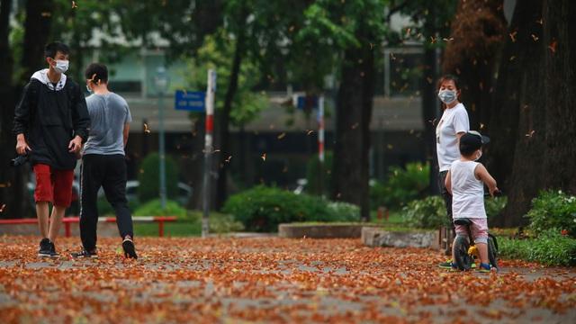 Sài Gòn đẹp xao xuyến trong mùa hoa chong chóng
