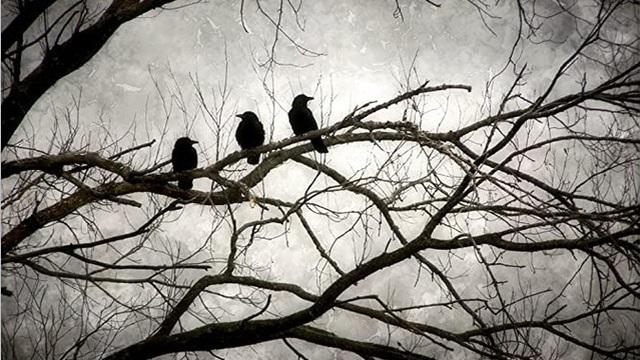 Quạ bố hỏi quạ con thứ gì đáng sợ nhất trên đời và 3 đáp án khiến nhiều người phải suy ngẫm