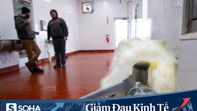 Covid-19: Thị trường thực phẩm Mỹ đóng băng, nông dân tự tay đổ đi hàng chục nghìn lít sữa bò