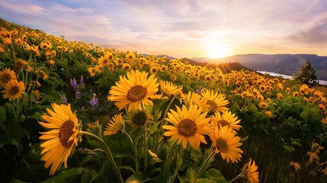 Chọn một bông hoa yêu thích và khám phá vận may nào đang chờ đợi bạn trong nửa cuối năm 2020