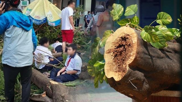 Họp báo vụ cây bật gốc đè 13 học sinh thương vong ở TP.HCM: HS lớp 6 không qua khỏi sau 65 phút cấp cứu