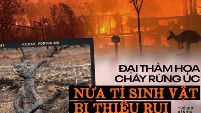 Gần NỬA TỈ sinh vật bị thiêu rụi, 1/3 số gấu Koala chết cháy: Úc đang trải qua trận cháy rừng 'đại thảm họa' thực sự mà chưa nhìn thấy lối thoát