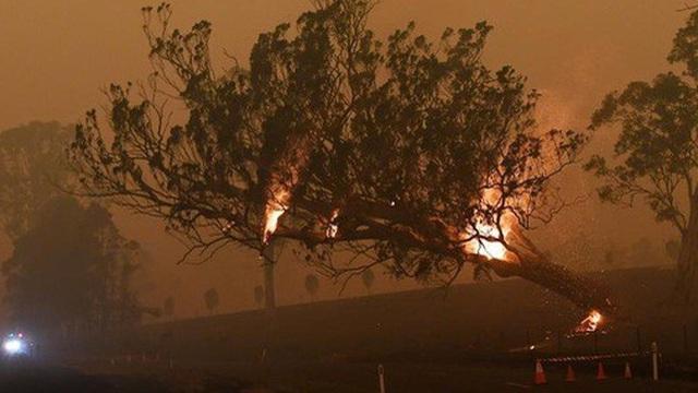 Úc bắt giữ 24 người đổ thêm dầu vào lửa giữa thảm họa cháy rừng
