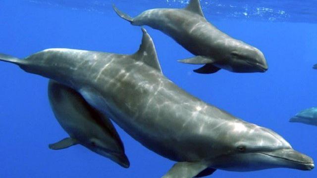 Màn phối hợp săn mồi mãn nhãn giữa cá heo và cò trắng