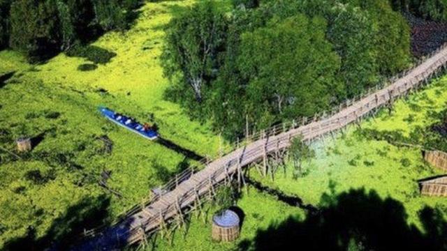 Ngỡ ngàng chiếc cầu tre dài nhất Việt Nam nằm giữa rừng tràm