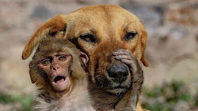 Mẹ qua đời vì bị đầu độc, khỉ con được chó nhận nuôi và tình mẫu tử khác loài khiến MXH cảm động