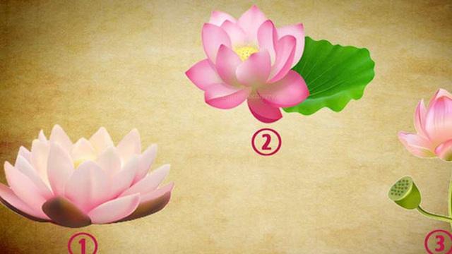 Chọn lấy một bông hoa sen yêu thích để khám phá vận may nào sắp ập đến với bạn