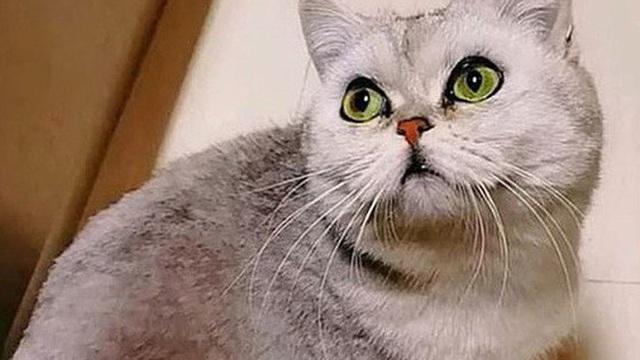 Cô mèo sống sót sau 40 ngày 'mang nặng đẻ đau' trong căn hộ không người vì cả nhà đi điều trị COVID-19