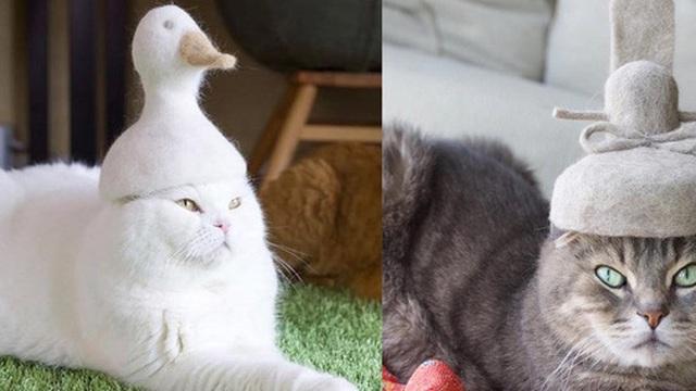 Khi tụi mèo được đội mũ làm từ lông của chính chúng