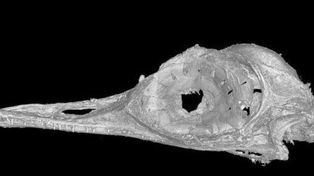 Phát hiện loài khủng long ăn thịt có kích cỡ nhỏ nhất trên Trái Đất, còn bé hơn cả một con chim ruồi