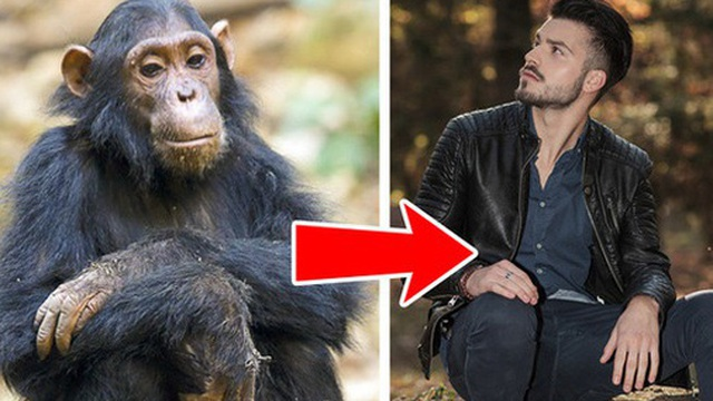 Con người tiến hóa từ vượn? Những quan điểm sinh học sai lầm mà nhiều người vẫn 'tin sái cổ'