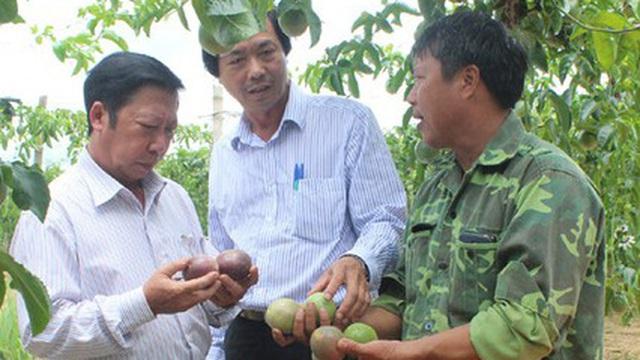Làm giàu từ những cây ăn quả trồng theo tiêu chuẩn an toàn sinh học