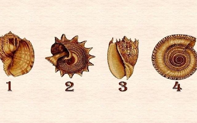 Hãy chọn một vỏ ốc yêu thích nhất và khám phá những bí mật sâu sắc nhất trong con người bạn