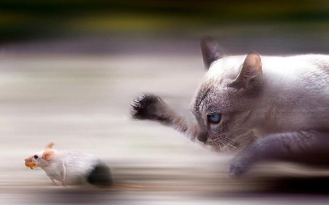 Nhìn thấy mèo là sợ, chuột cầu cứu sự giúp đỡ đến 3 lần và hồi kết khiến nhiều người giật mình xem lại bản thân
