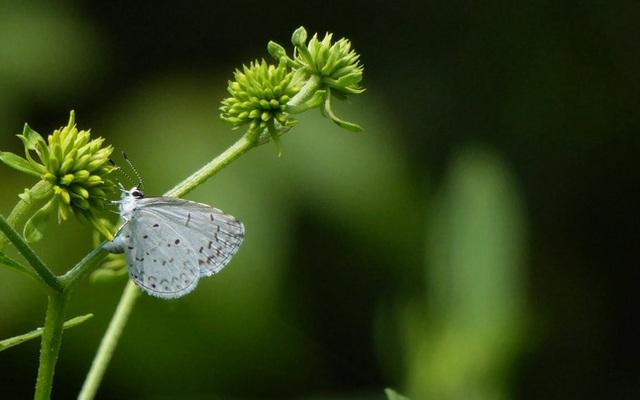 Trắc nghiệm tâm lý: Hành trình con bướm trắng và khám phá bí mật cuộc sống nửa cuối năm 2020 của bạn