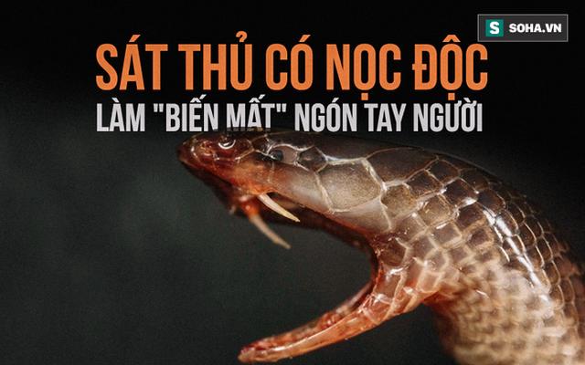 Loài rắn kỳ dị nhất hành tinh: Cắn người không cần há miệng, nọc hủy hoại mô nghiêm trọng