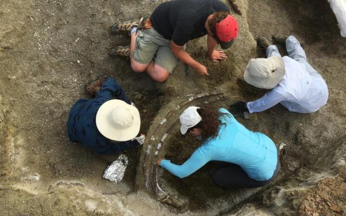 Phát hiện hộp sọ nặng hơn 1.300 kg, đội khảo cổ mất 2 tháng để khai quật