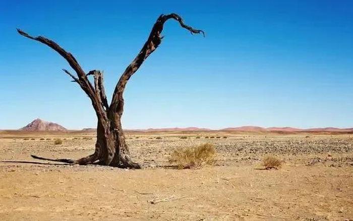 Đi tìm kho báu trên sa mạc rộng lớn bỗng gặp một nhóm người lạ mặt, bạn sẽ làm gì? Câu trả lời sẽ tiết lộ...