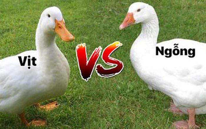 Những loài động vật mang ngoại hình na ná nhau nhưng hóa ra không hề liên quan