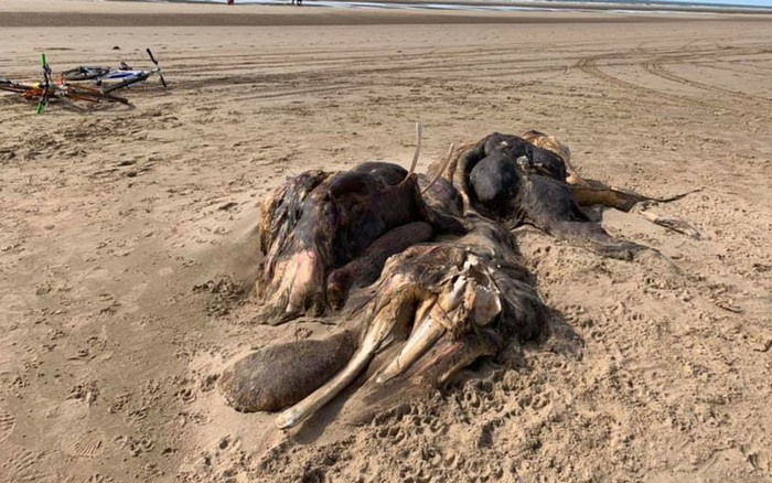 Bí ẩn sinh vật dài 4,5 mét nằm trên bờ biển Anh - kết quả xổ số đắc nông