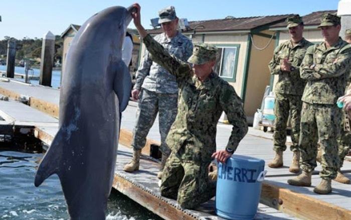 """Địa Trung Hải """"dậy sóng"""" khi Nga đưa biệt đội cá heo đến Syria"""