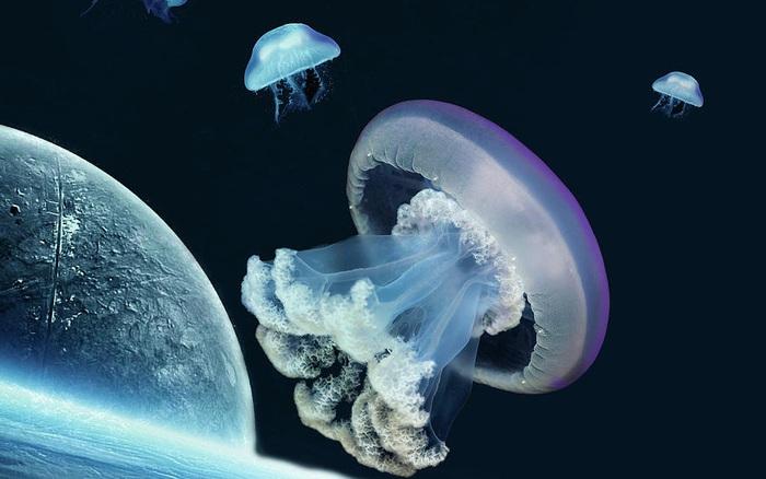 NASA đưa 2.487 con sứa vào không gian: Chúng sinh sản rất thành công nhưng lại có điều bất thường