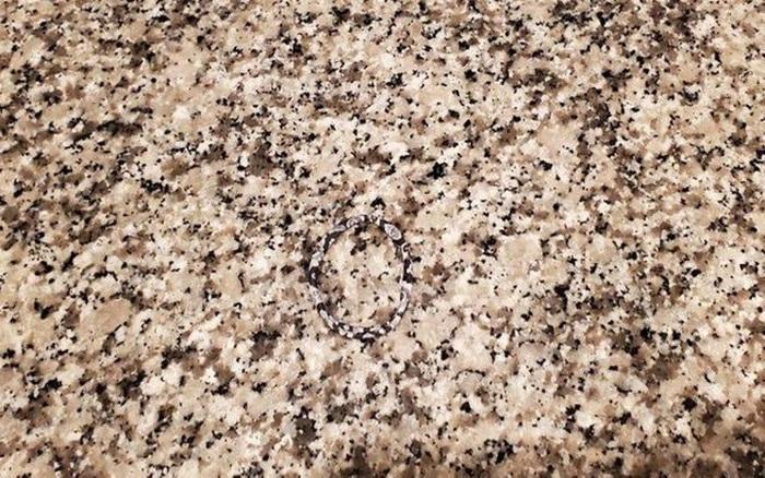 Thách thức thị giác 3 giây: Đố bạn tìm ra chiếc băng đô hoa trên tấm thảm này