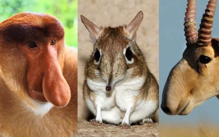[ẢNH] Những động vật có chiếc mũi đặc biệt