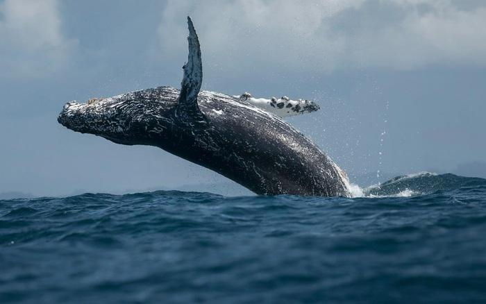 4 loài động vật của đại dương