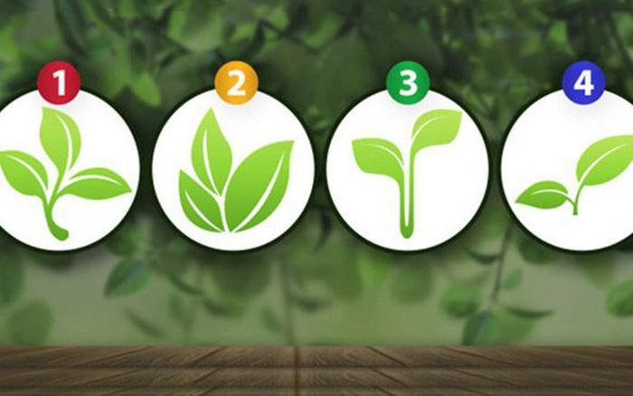 Mầm cây bạn chọn sẽ giúp bạn tìm thấy điều đặc biệt trong con người mình