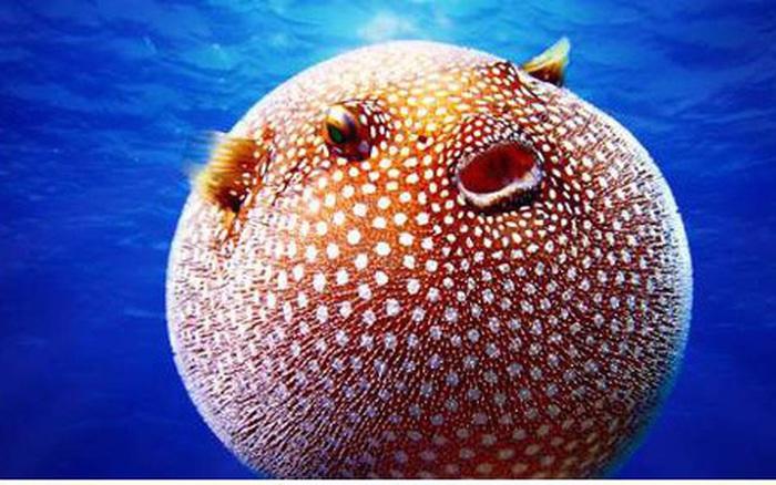 """Những sinh vật """"độc nhất vô nhị"""" dưới đáy đại dương"""