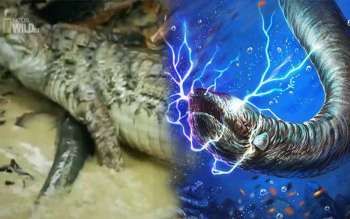 1001 thắc mắc: Thủy quái Amazon ăn gì, sao phóng điện giết được cả cá sấu?