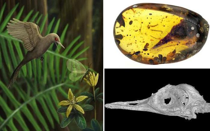 Phát hiện loài khủng long nhỏ hơn cả chim ruồi