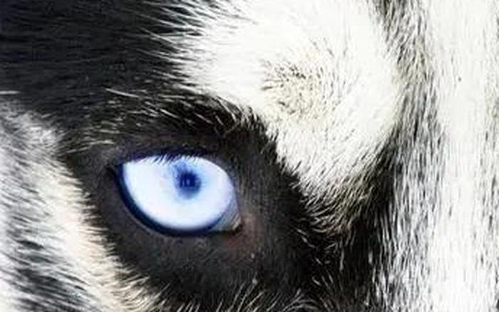 Chọn ánh mắt đáng sợ nhất, câu trả lời sẽ tiết lộ bạn là người tuyệt tình như thế nào, sẵn sàng buông bỏ...