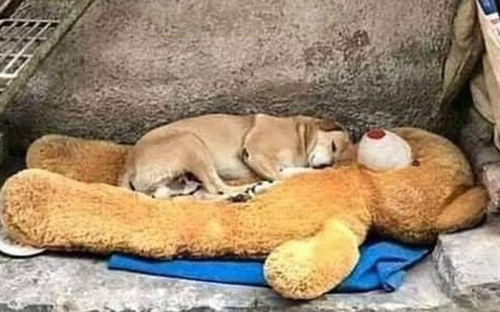 Những bức ảnh khiến chúng ta biết trân quý và thêm yêu cuộc sống này hơn dù đôi khi có nhiều khó khăn bủa...